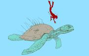 Illustration of Atlantochelys mortoni