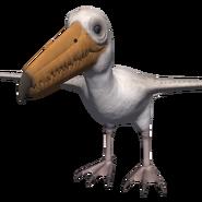Miocene Pelican (Palegornis)