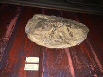 Restaurantosaurus Seymouria Fossil