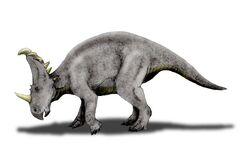 Sinoceratops NT.jpg