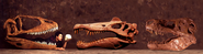 Carcha, Spino y T-rex