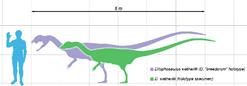 Dilophosaurus scale