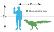 Zhenyuanlong size chart