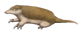 Resultado de imagem para Riostegotherium yanei