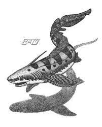 Xenacanthus