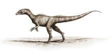 220px-Dracoraptor hanigani