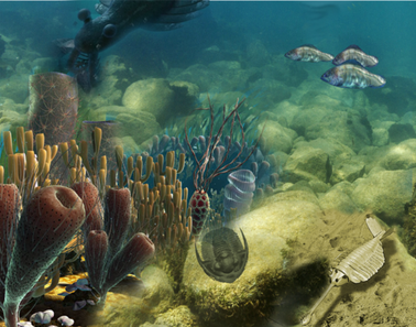 Cambrianscene