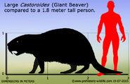 Castoroides-size