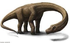 Artist Rendering 2 - Hall - Dreadnoughtus reconstruction.jpg