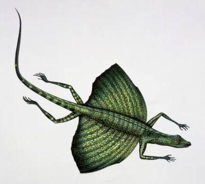KuehneosaurusGE