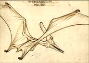 Pterano-sketch 2