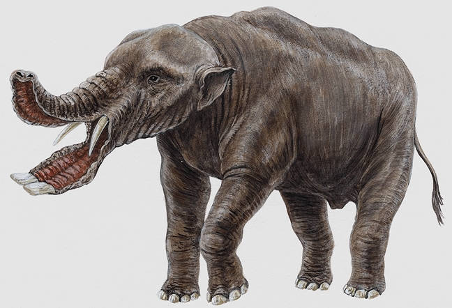 Image result for gomphotheres