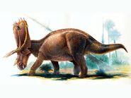 Anchiceratops2 b17c
