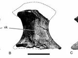 Barrosasaurus