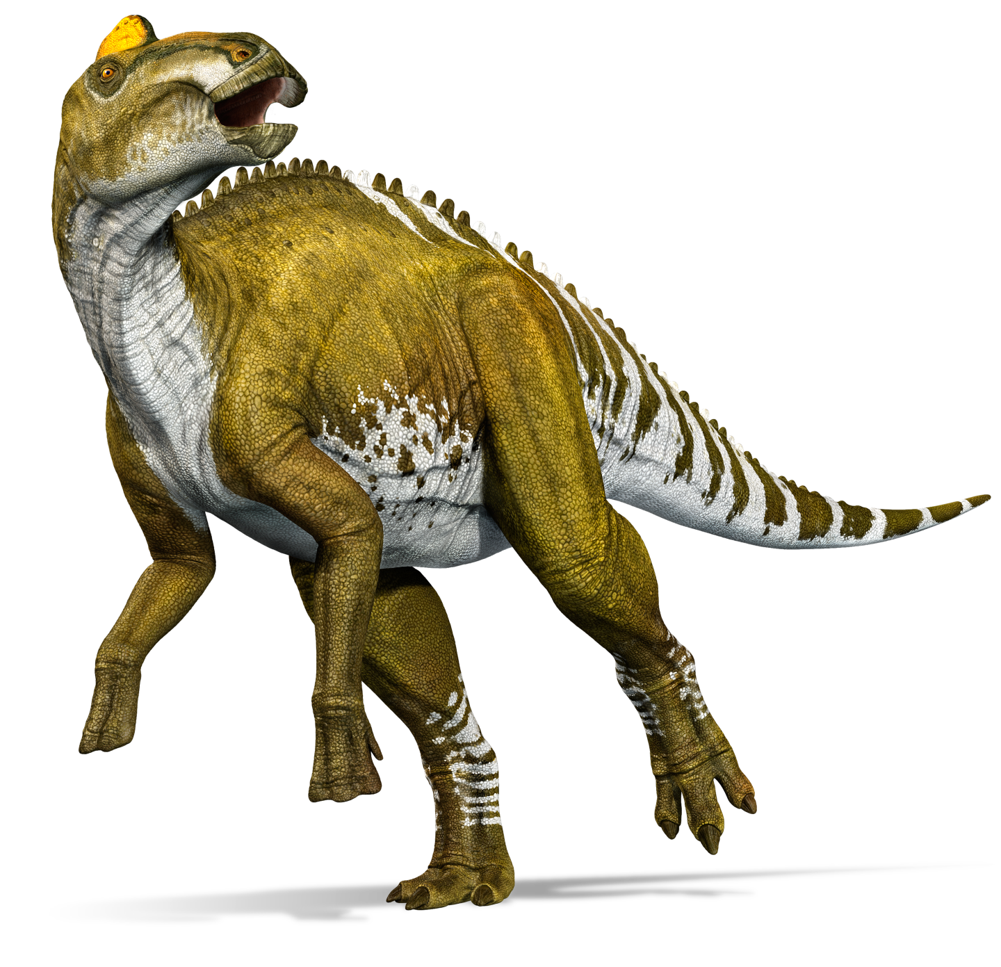 Image result for edmontosaurus