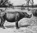 Diceratherium