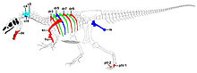 Allosaurus -Big Al II-