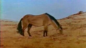 Equis, The Evolution of the Horse
