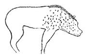 Crocuta crocuta cave art - Chauvet cave