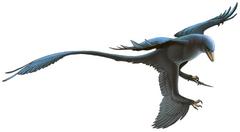 Fred Wierum Microraptor.png