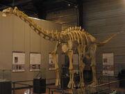 800px-Ampelosaurus atacis 2