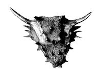 Mirabilis skull