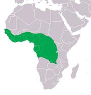 220px-Crocodylus cataphractus Distribution.png