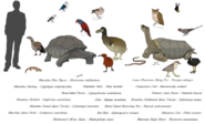 Drawing of native animals of Mauritius