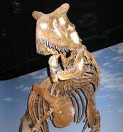 Carnosaurus skeleton