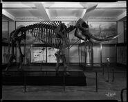 Mastodon in Hall 38