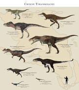 Chinese tyrannosaurs by paleoguy-d7la78s