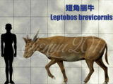 Leptobos