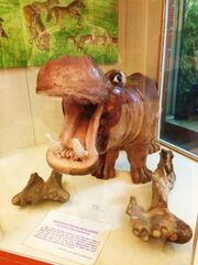 Fibre-Glass-Model-and-fossils-of-Hexaprotodon-Sivalensis-an-extinct-Hippopotamus-at-Wadia-Institute-of-Himalayan-Geology-Dehradun-224x300