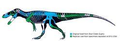 Torvosaurus tanneri osteograph