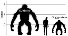 Size Giganto