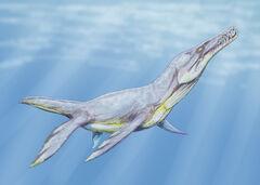 Plesiopleurodon2DB.jpg