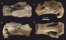 220px-Dracoraptor cervical vertebra