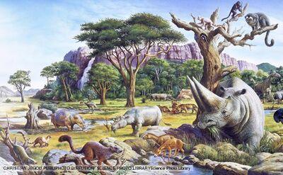 Paleocene 1