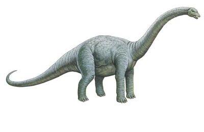 Bothriospondylus 0001