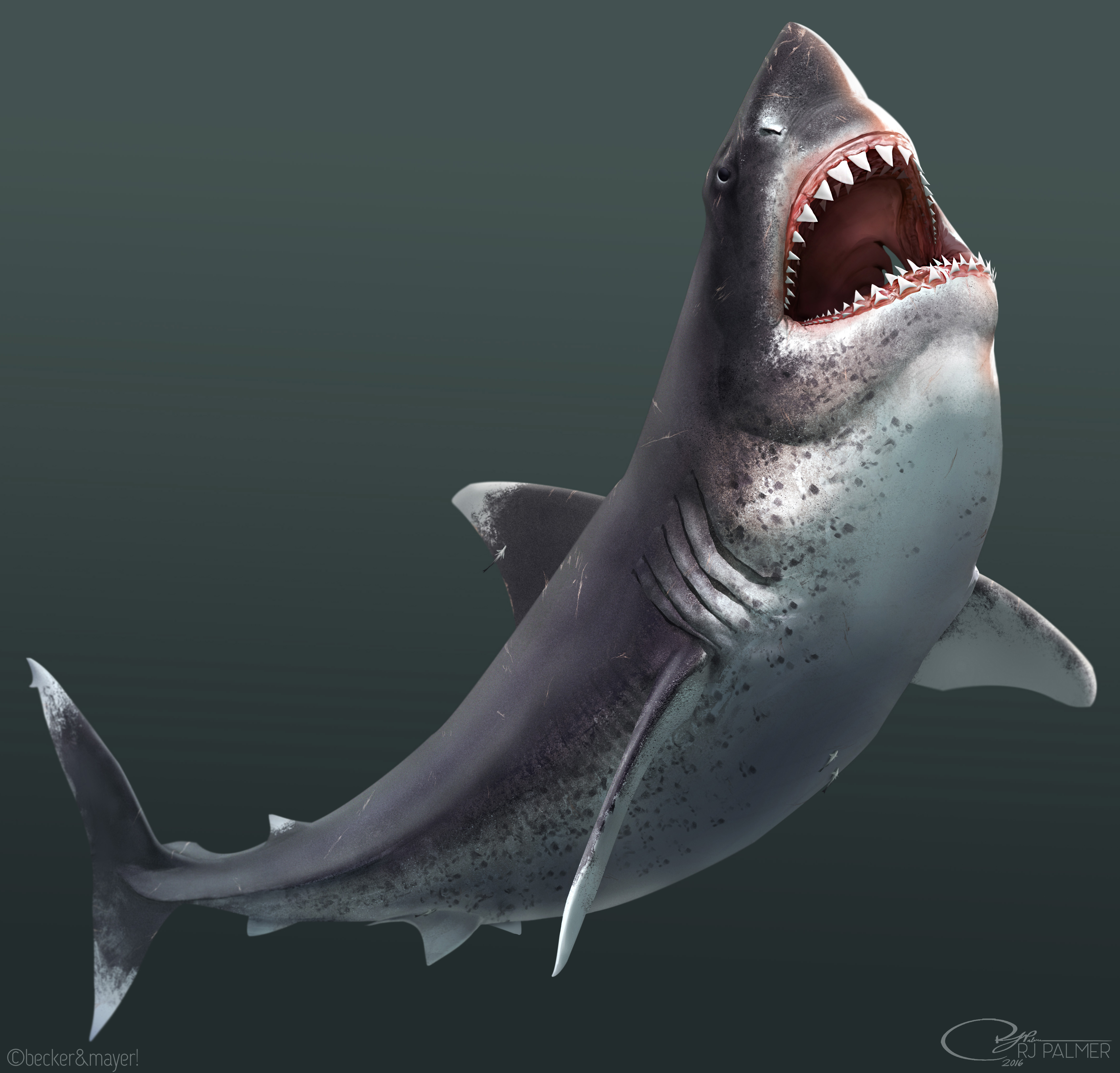 Megalodon dinopedia fandom powered by wikia megalodon altavistaventures Image collections