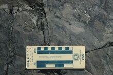 Smallest-dinosaur-tracks-2
