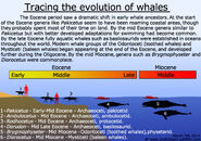 Tracing-the-evolution-of-whales