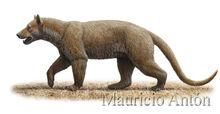 A-longiramus-recons-2-low-res