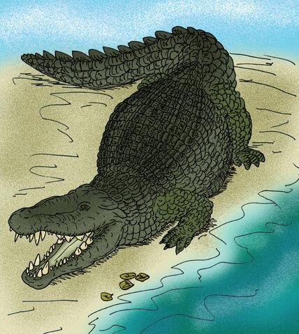 File:Deinosuchus hatcheri.JPG