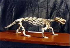 Uralocynodon