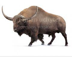 Bison-latifrons-white-738x591.jpg