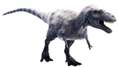 Feather Albertosaurus