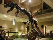 T-Rex at the Carnegie Museum