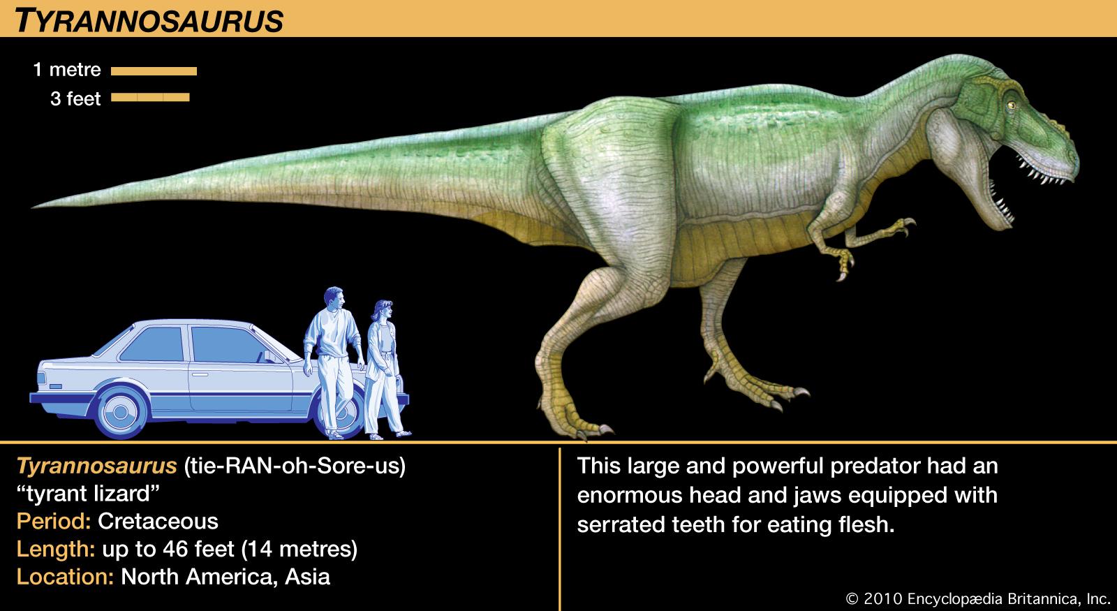 Image - T-rex fact card.jpg | Dinopedia | FANDOM powered ...