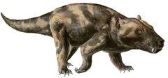 Cynognathus.jpg